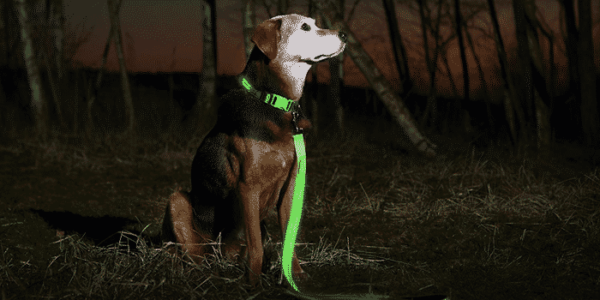 10 Best Rechargeable LED Dog Collar For Hiking 2021 – [Buyer's Guide]