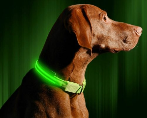 Illumiseen LED Dog Collar - USB Rechargeable